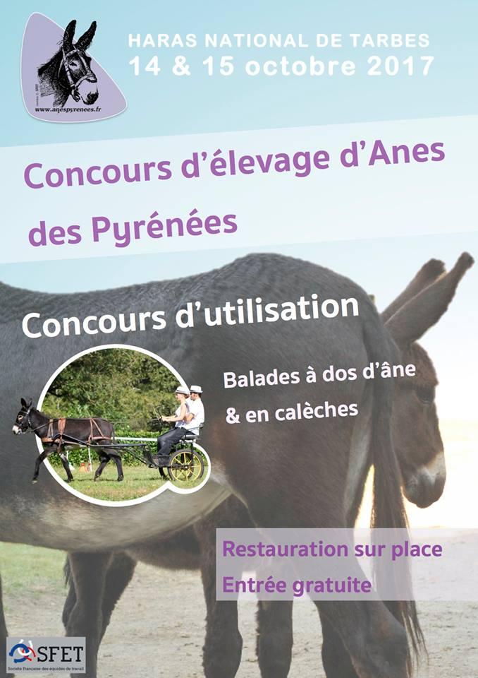 Concours d'élevage Anes  des Pyrénées